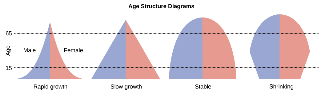 Typical population age structure diagrams